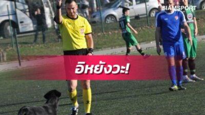 ข่าวไม่ต้องดูวีเออาร์! เปาสุดทนชูใบแดงตะเพิดน้องหมาข้อหาผิดซ้ำซาก